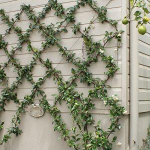 Tuinbevestigingsmaterialen